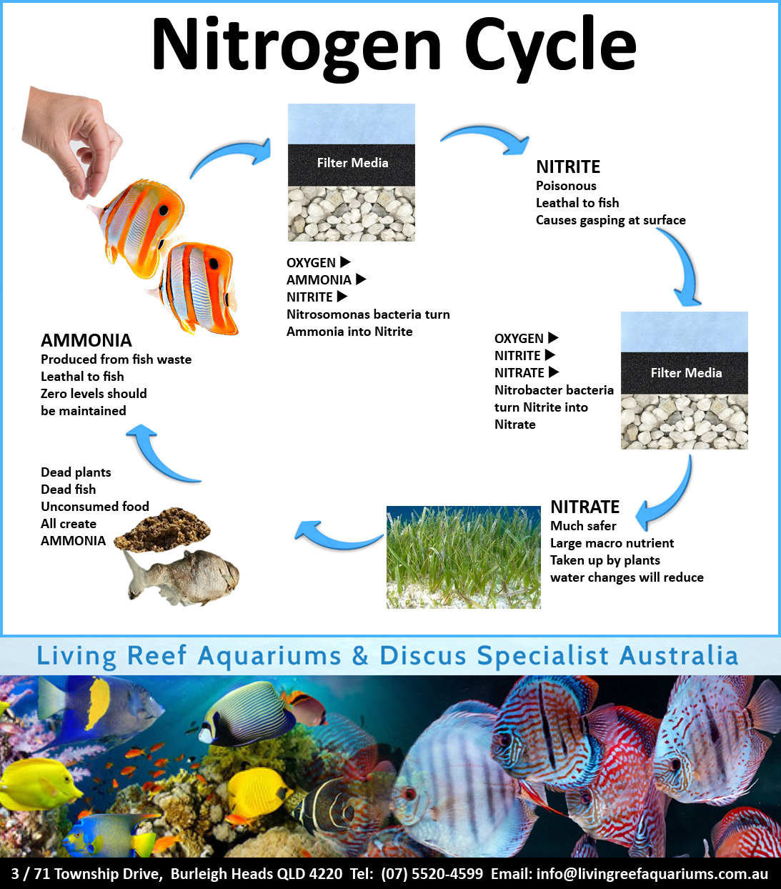 How to set up a saltwater aquarium living reef aquariums for High nitrite in fish tank