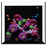 Waterbox cube 20-Living Reef Aquariums