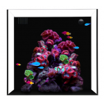 Waterbox Cube 10-Living Reef Aquariums